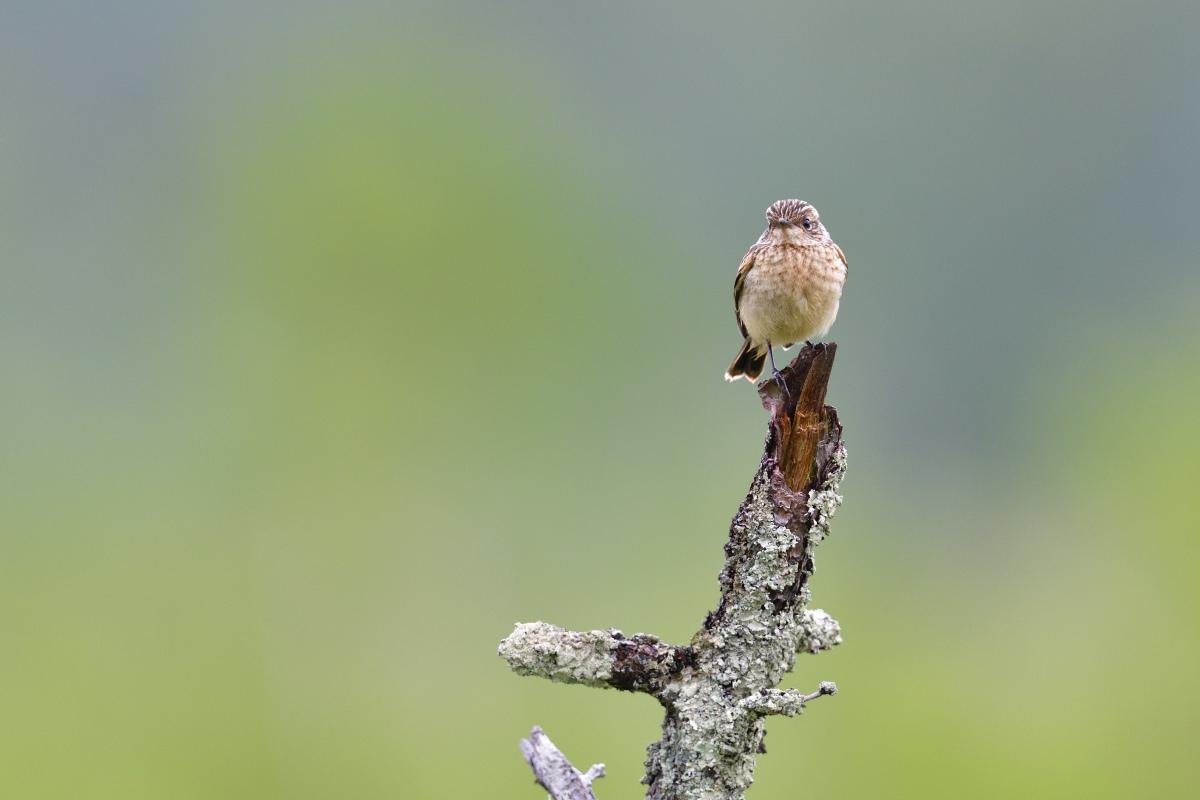 高原の野鳥⑥_f0288418_20571091.jpg