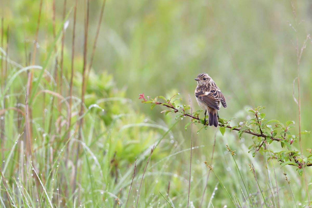 高原の野鳥⑥_f0288418_20571686.jpg