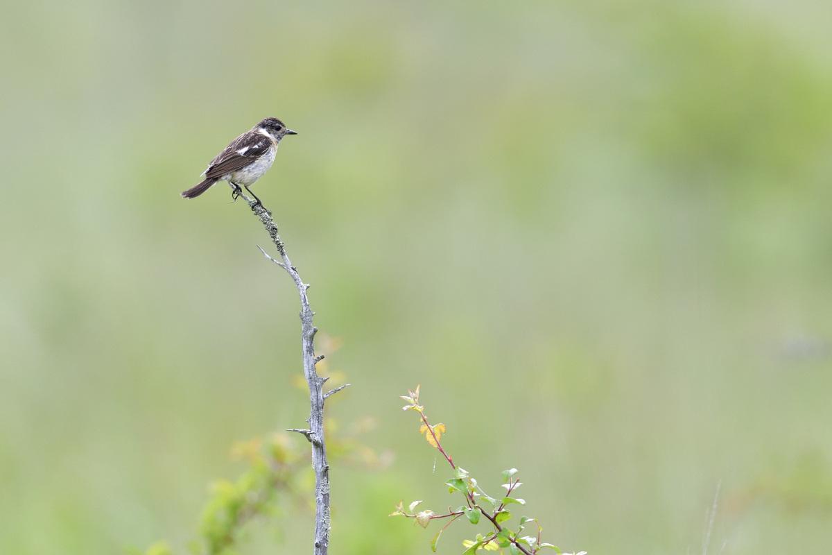 高原の野鳥⑥_f0288418_20572280.jpg
