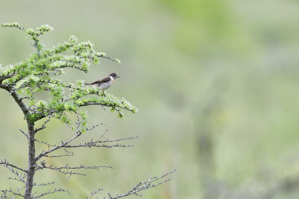高原の野鳥⑥_f0288418_20572848.jpg