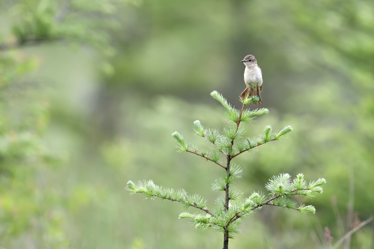 高原の野鳥⑥_f0288418_20574369.jpg