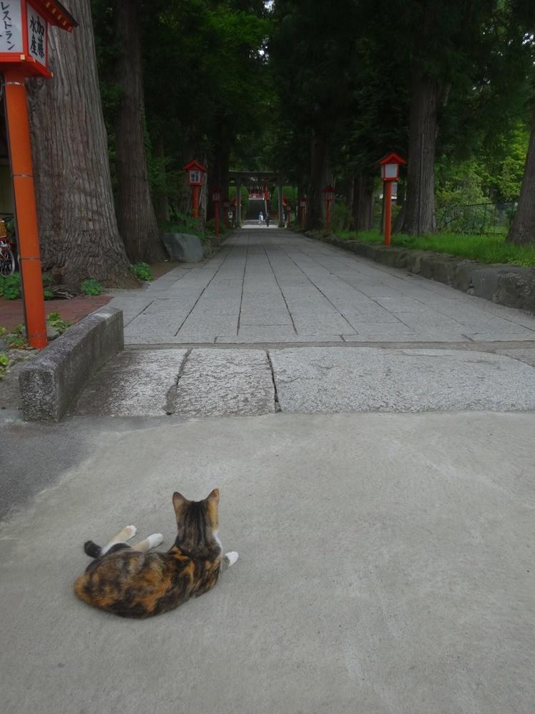 3匹目の社務猫か_c0111229_19090796.jpg