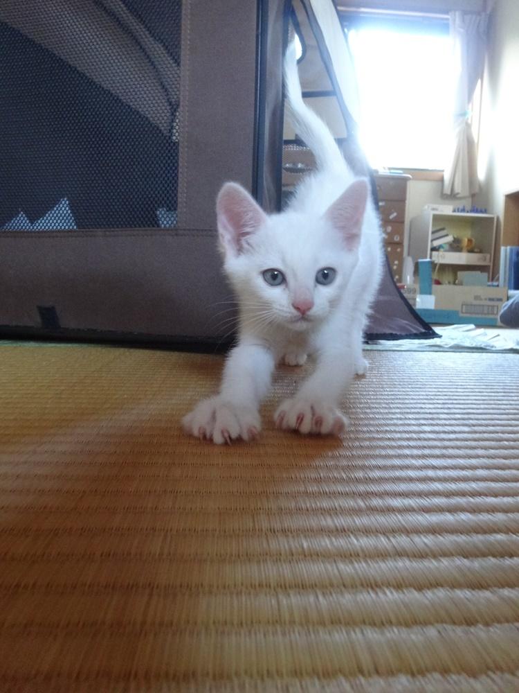 3匹目の社務猫か_c0111229_19092856.jpg