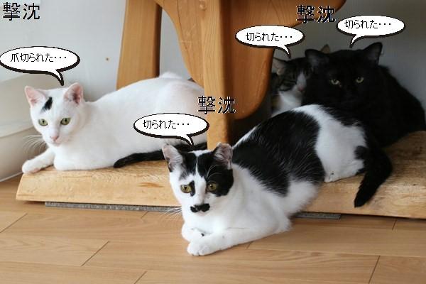 保護猫さん、爪を切る_e0151545_20500556.jpg