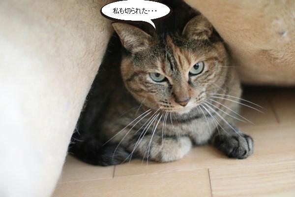 保護猫さん、爪を切る_e0151545_20501475.jpg