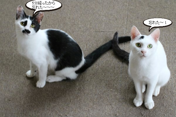 保護猫さん、爪を切る_e0151545_20503982.jpg