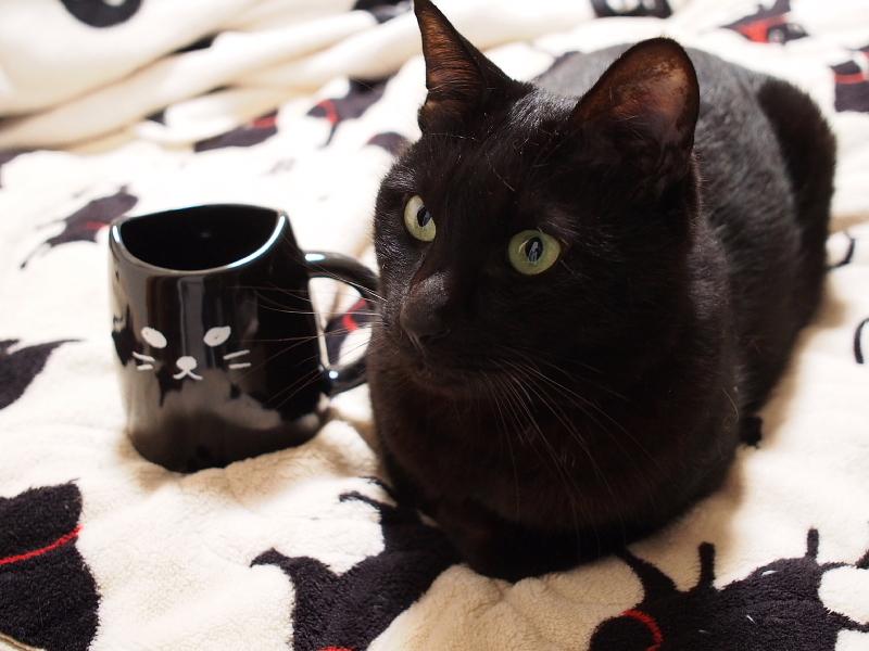 【誕生記念日】黒猫ゆめ 9歳。_b0008655_22374283.jpg