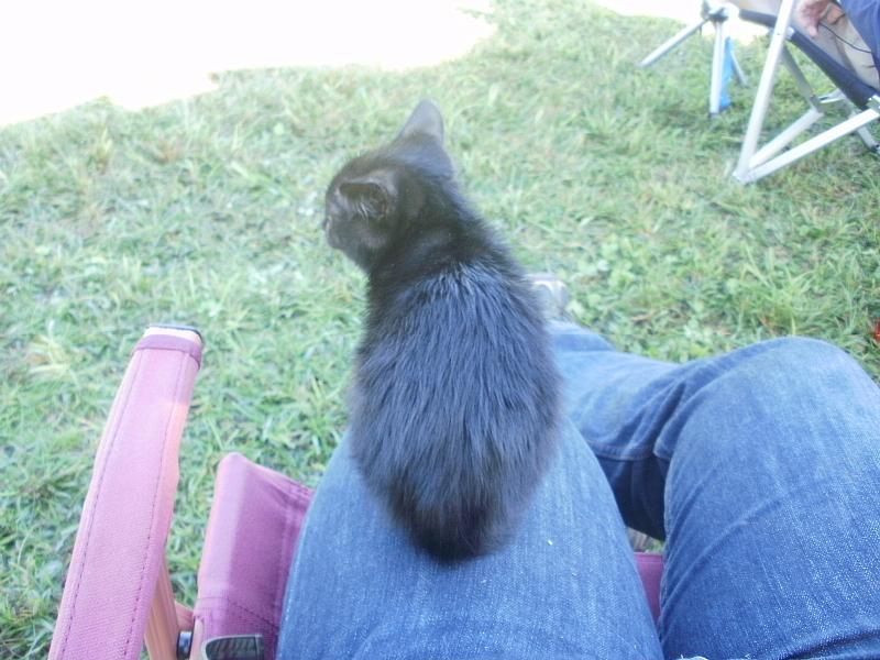【誕生記念日】黒猫ゆめ 9歳。_b0008655_22380057.jpg