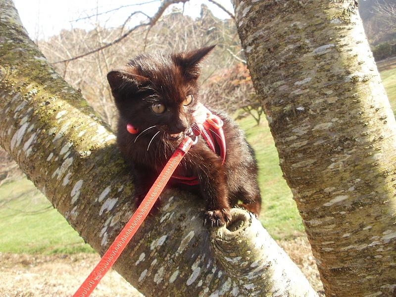【誕生記念日】黒猫ゆめ 9歳。_b0008655_22382498.jpg