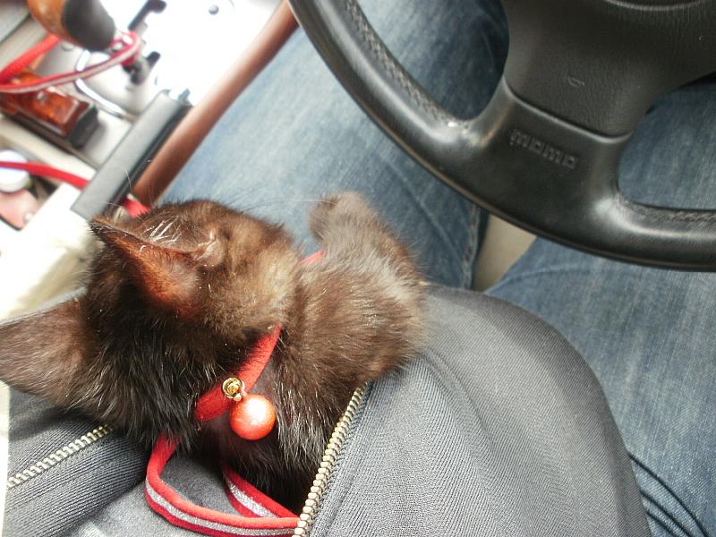【誕生記念日】黒猫ゆめ 9歳。_b0008655_22383423.jpg