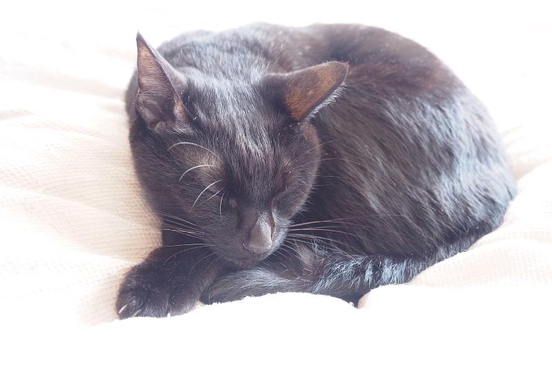 【誕生記念日】黒猫ゆめ 9歳。_b0008655_22390319.jpg
