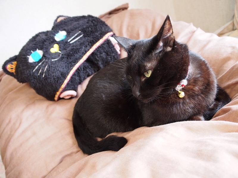 【誕生記念日】黒猫ゆめ 9歳。_b0008655_22393950.jpg