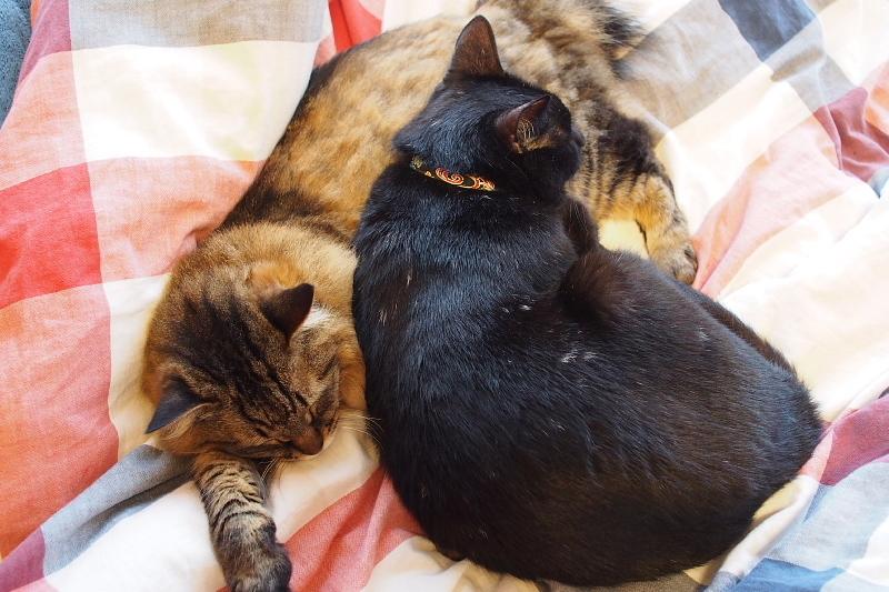 【誕生記念日】黒猫ゆめ 9歳。_b0008655_22395145.jpg