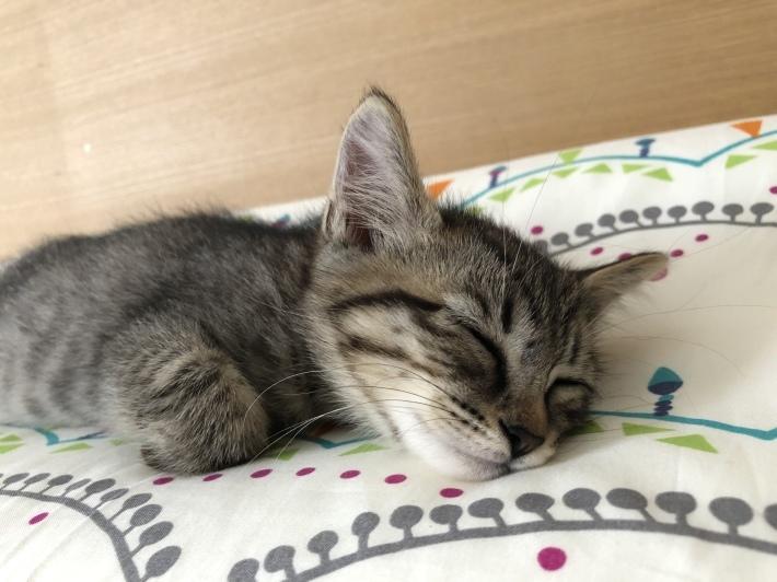 仔猫のピノ_e0056272_23142094.jpeg