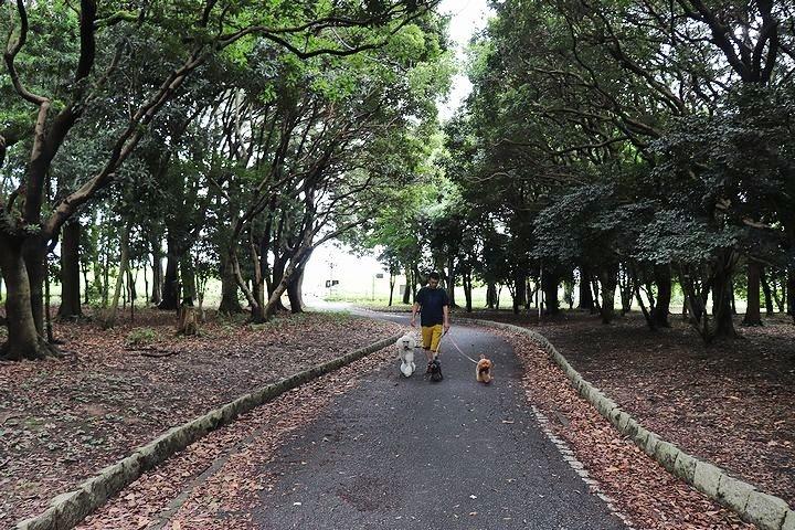 雨上がりのいつもの公園。_b0111376_15255582.jpg