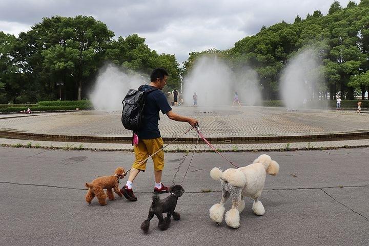 雨上がりのいつもの公園。_b0111376_15320742.jpg