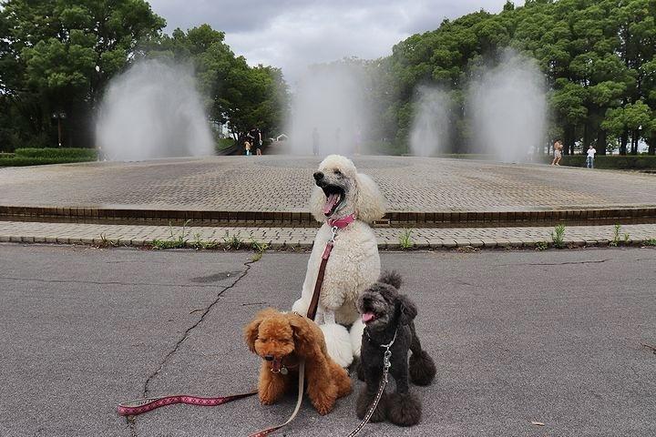 雨上がりのいつもの公園。_b0111376_15410754.jpg