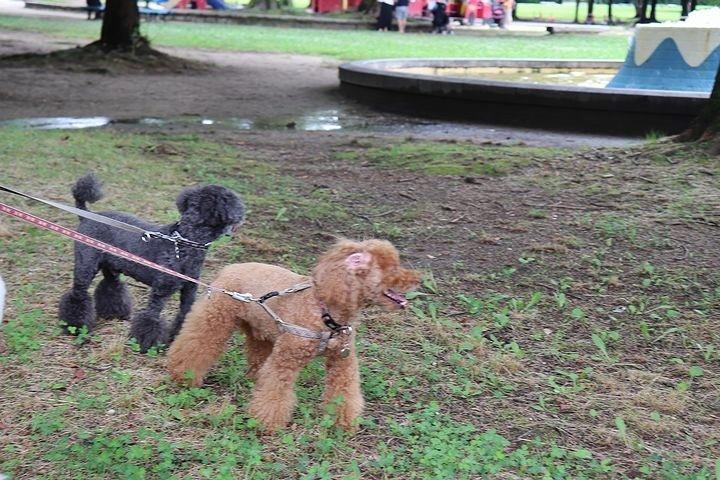 雨上がりのいつもの公園。_b0111376_15420852.jpg