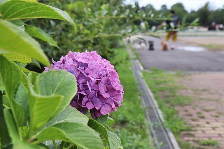 雨上がりのいつもの公園。_b0111376_15434783.jpg