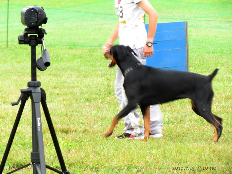 7月15日、JKC北海道ブロック訓練競技会_f0067179_16034076.jpg