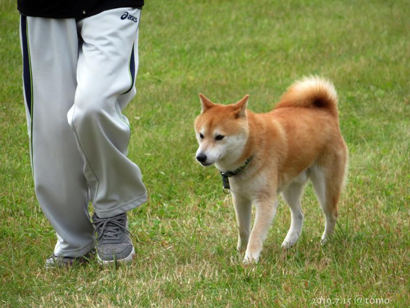 7月15日、JKC北海道ブロック訓練競技会_f0067179_16034907.jpg
