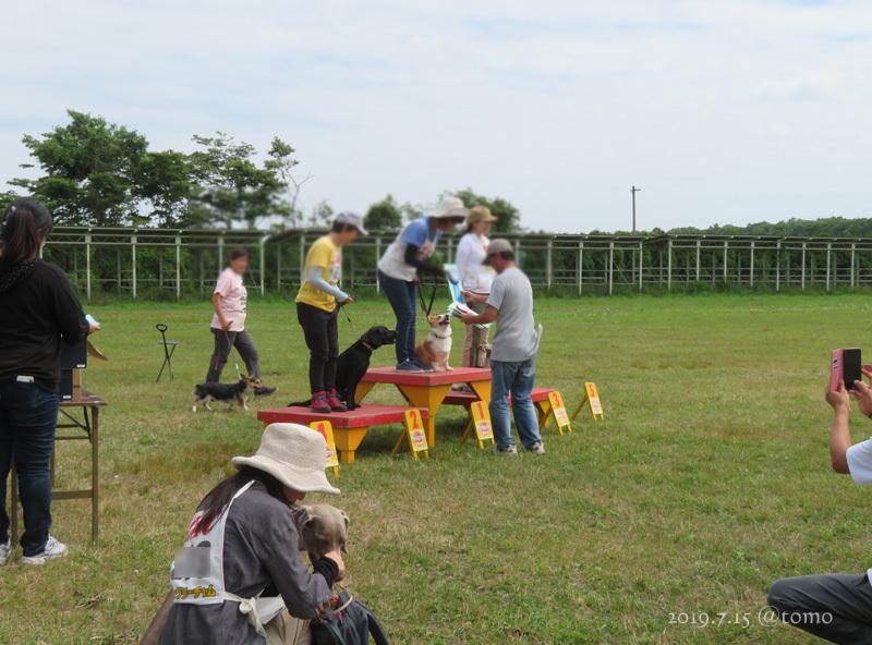 7月15日、JKC北海道ブロック訓練競技会_f0067179_16043506.jpg