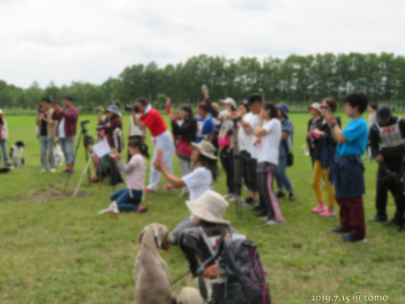 7月15日、JKC北海道ブロック訓練競技会_f0067179_16044777.jpg
