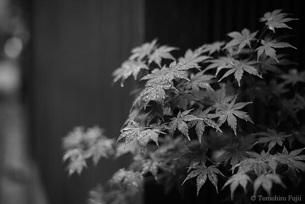 金沢にて_c0030685_19581670.jpg