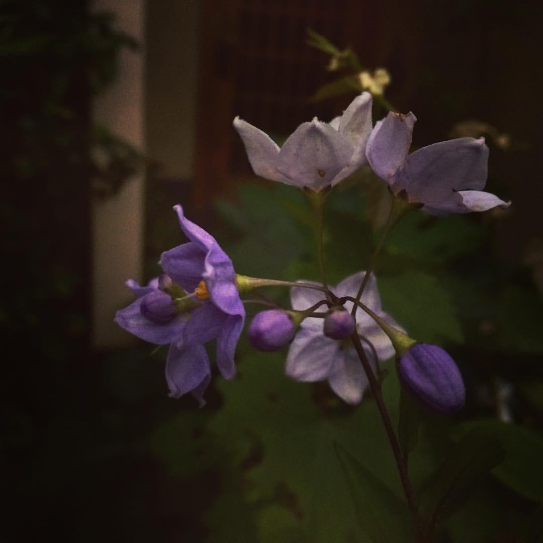 我が家の庭から_a0129492_20425625.jpeg
