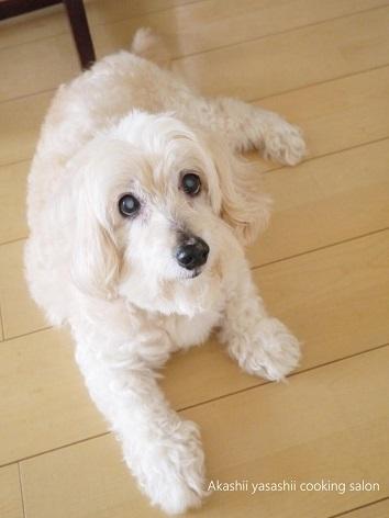 愛犬ラン☆清らかな旅立ち_f0361692_10235599.jpg
