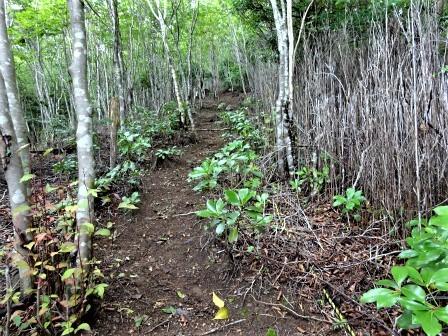 みんなの森活動日記_d0105723_18565291.jpg