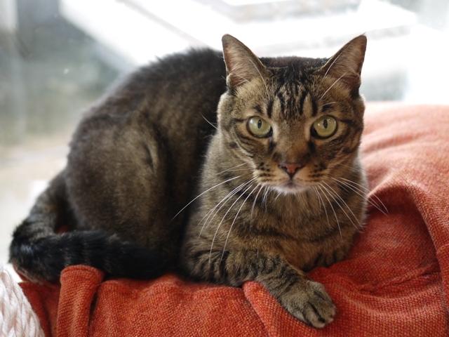 猫のお留守番 ララちゃん編。_a0143140_21202875.jpg