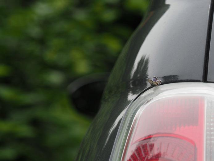 車にヒメシジミ - 続_d0149245_16533940.jpg