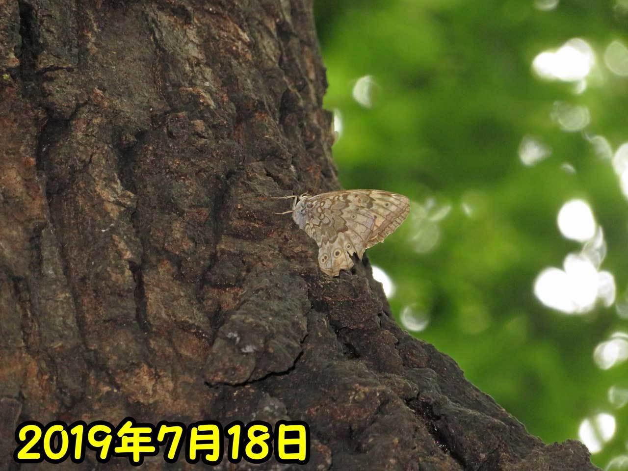 e0253104_19112185.jpg