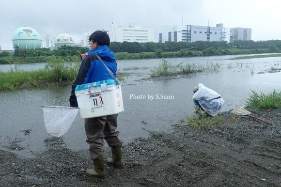 相模川で水生昆虫調査(2019年7月)_b0348205_23123848.jpg