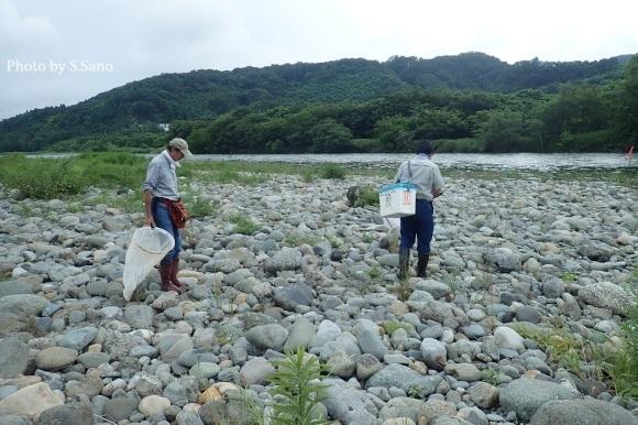 相模川で水生昆虫調査(2019年7月)_b0348205_23130339.jpg