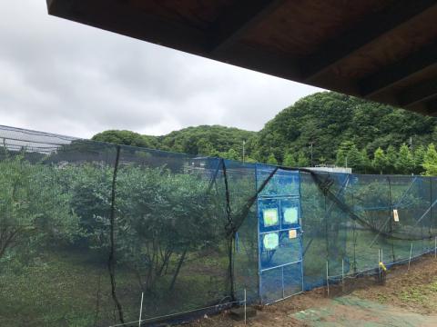 本日雨の中、小山田ブルーベリー園開園しました!_f0331126_20192097.jpg