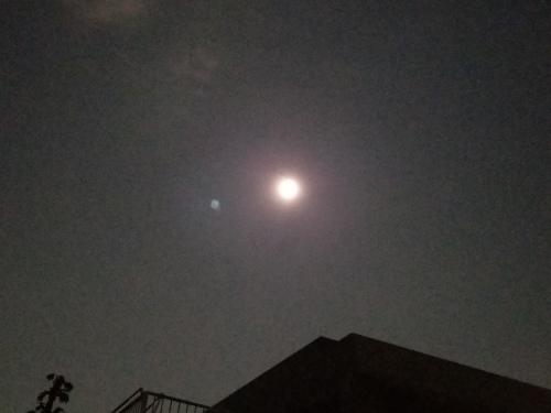 日本人は幽霊が好きなのだ 能「夕顔」&狂言「左近三郎」@国立能楽堂_e0016828_10315120.jpg