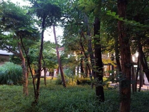 日本人は幽霊が好きなのだ 能「夕顔」&狂言「左近三郎」@国立能楽堂_e0016828_10321639.jpg