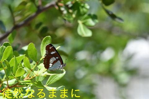 LOPUD島②_d0285540_19541074.jpg