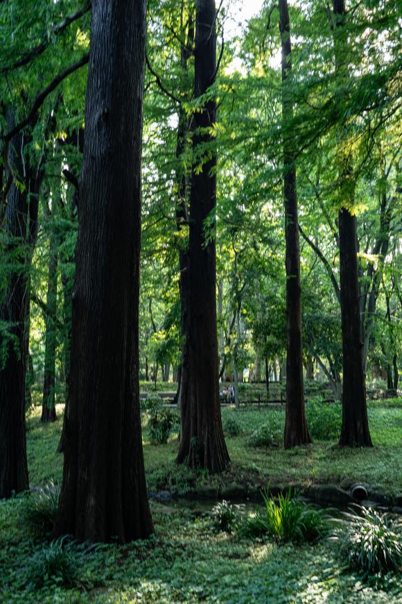 2019/07/18 林試の森界隈_b0171364_10532644.jpg