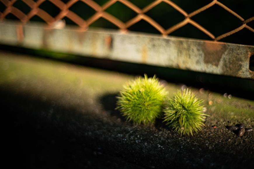 2019/07/18 林試の森界隈_b0171364_10533488.jpg