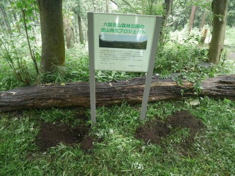 ヤマツツジの苗木の植樹に向け穴掘り7・17六国見山臨時_c0014967_09535549.jpg