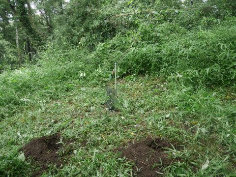 ヤマツツジの苗木の植樹に向け穴掘り7・17六国見山臨時_c0014967_09553855.jpg