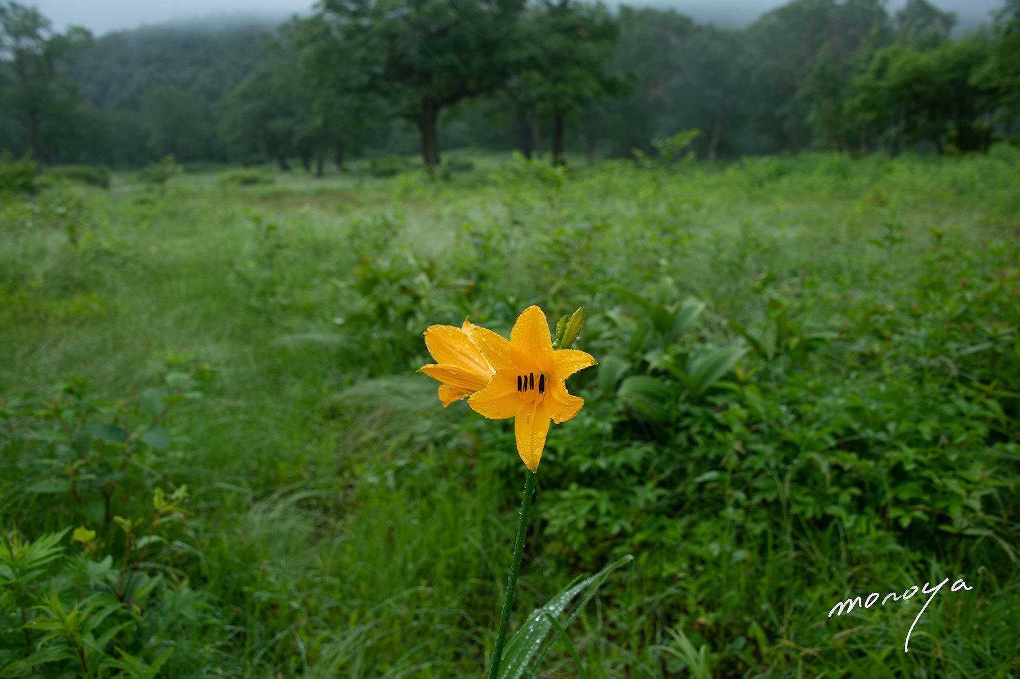 花の高原_c0085877_06071154.jpg