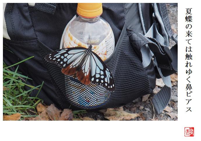 夏蝶の来ては触れゆく鼻ピアス_a0248481_22003728.jpg