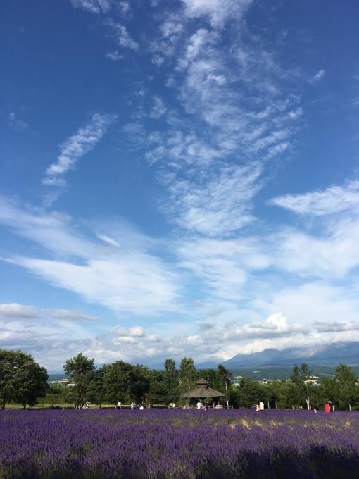 北海道からおはよう〜〜🌸🌸🌸_c0162404_10230331.jpg