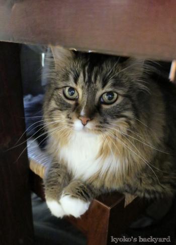 テーブルの下でご機嫌なBaileyさん_b0253205_04491581.jpg
