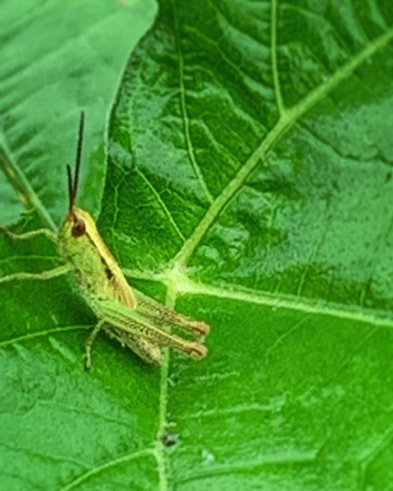 はたらく虫たち。。。_e0243332_13292063.jpg