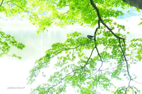 どんより空に_e0268051_17291324.jpg